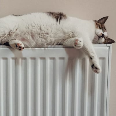 central heating servicing - cat on radiator